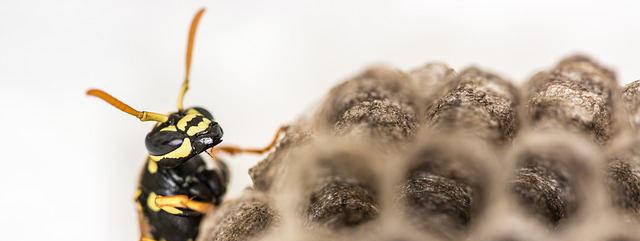Ökologisch / biologisch Wespennest beseitigen